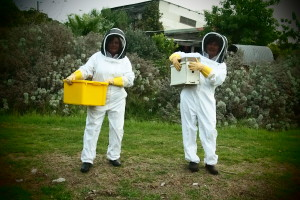 Collecting Honey at Fair Harvest