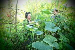 In the garden with certified organic grower Bee Winfield from Merri Bee organics