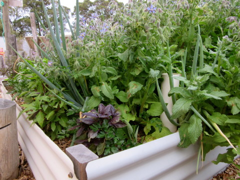 Wicking Beds for Summer
