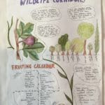 Extract from a PDC final design: Wildlife Corridors and fruiting calendar