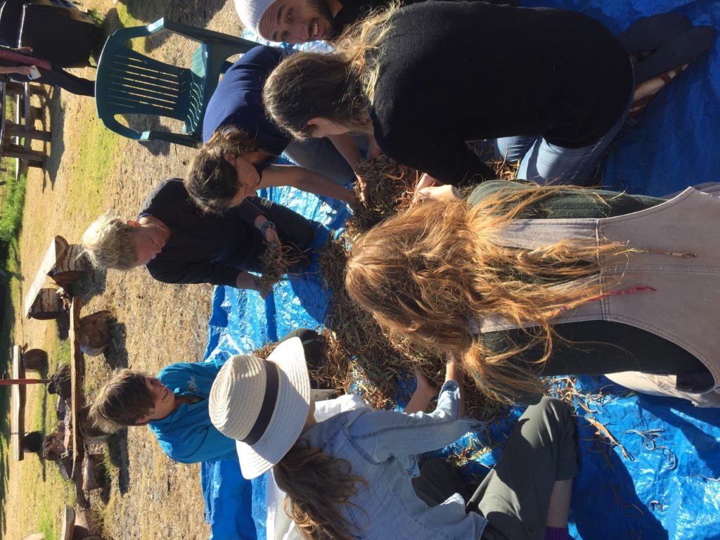 Group of happy young people sorting seeds on a blue tarp